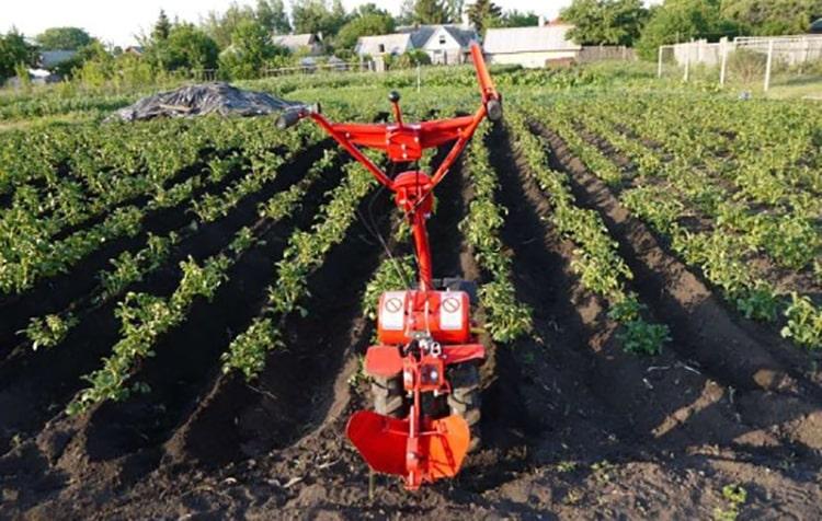 Окучивание картофеля мотокультиватором